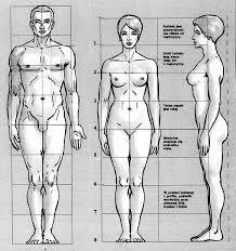 modelowanie figurki na stelażu proporcje ciała kobiety i mężczyzny